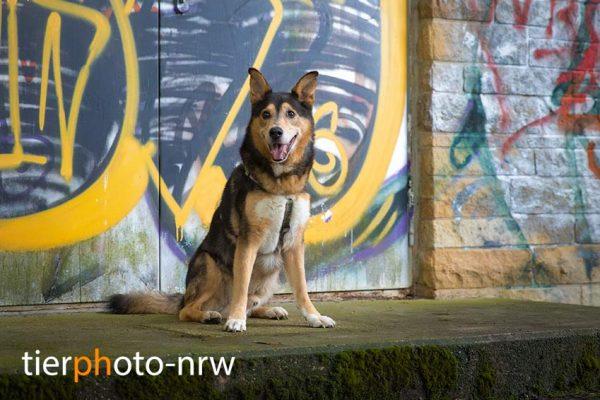 Gutschein Hundefoto