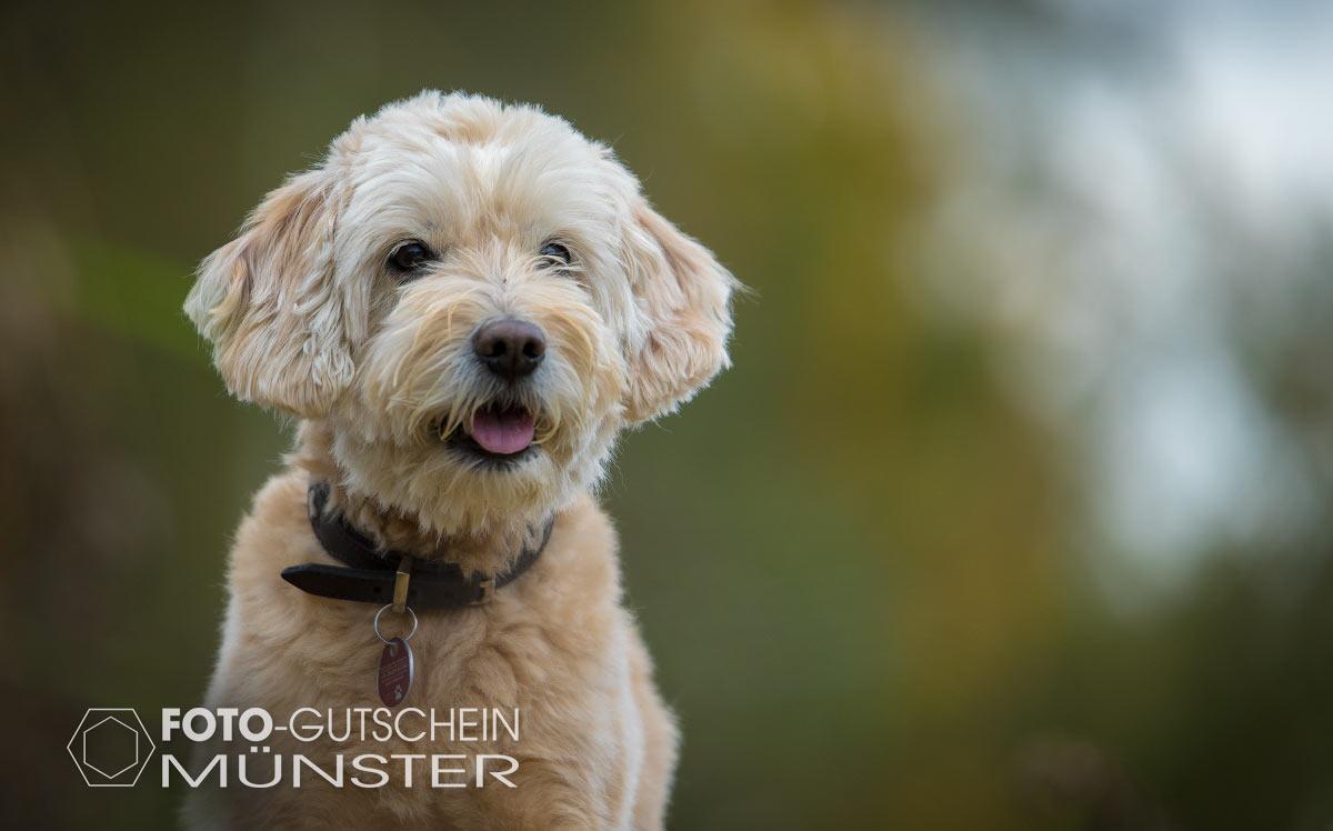 Hundefoto als Geschenk Gutschein