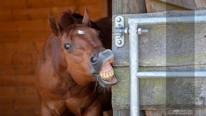 Gutschein fotoshooting Pferd