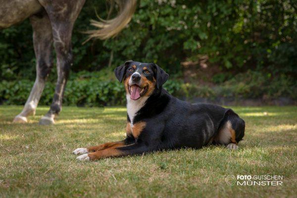 Gutschein fotoshooting Hund
