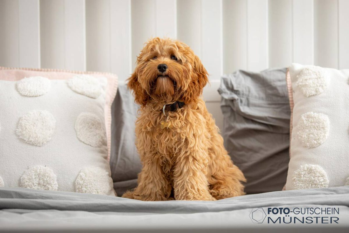 Gutschein Fotshooting Hund