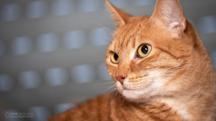 Katze Fotogutschein